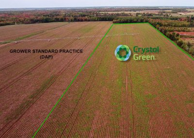 POTATO GROWER | Green Thumb: Crystal Green Provides Season-Long Phosphorus Supply