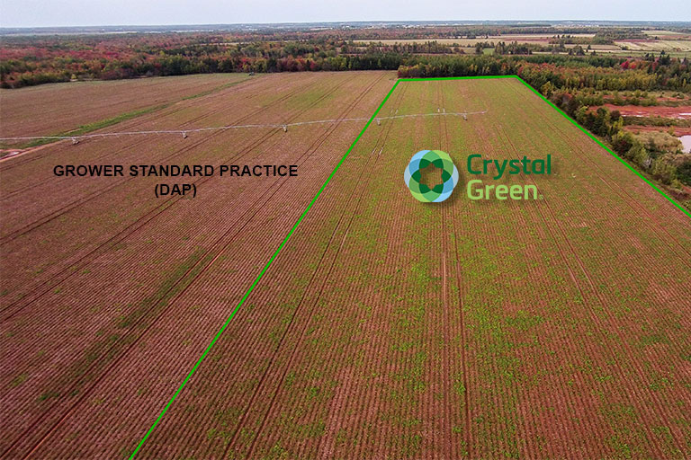Green Thumb:  Crystal Green Provides Season-Long Phosphorus Supply